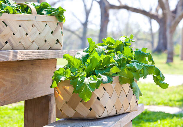 Узнайте как избавить участок от болезней, вредителей и сорняков одним махом!