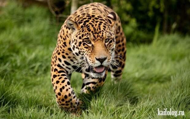 Потрясающие фото природы (55 штук)