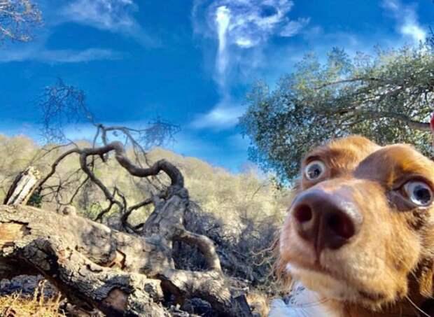"""4. """"Когда неожиданно открыл фронтальную камеру"""" забавно, забавные животные, истории, питомцы, подборка, смешно, собаки, хозяева"""