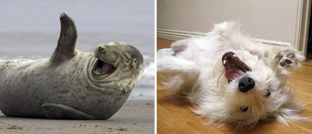 26.  животные, собака, сходство, тюлень