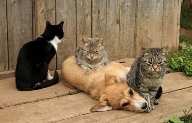 Кошкособ. Барбос, которого воспитали кошки (Окончание)