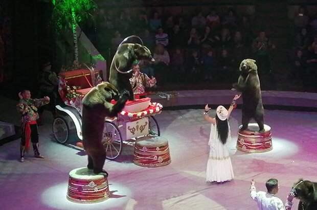 Цирковых животных будут отправлять на «пенсию» в крымский сафари-парк