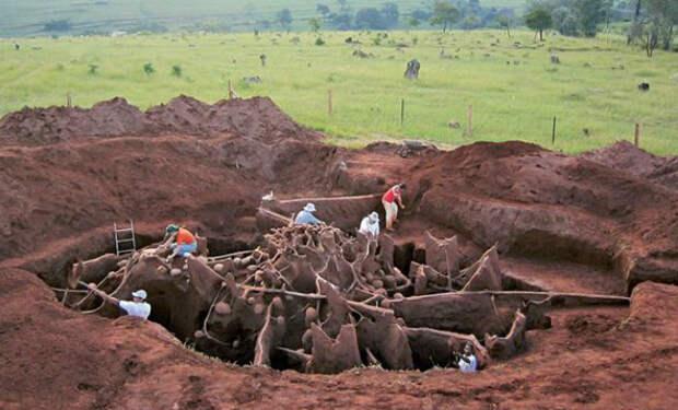 Ученые вылили раствор в муравейник, а потом раскопали подземные тоннели длиной 12 метров. Видео