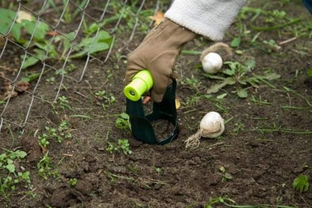 Приспособление для посадки луковиц