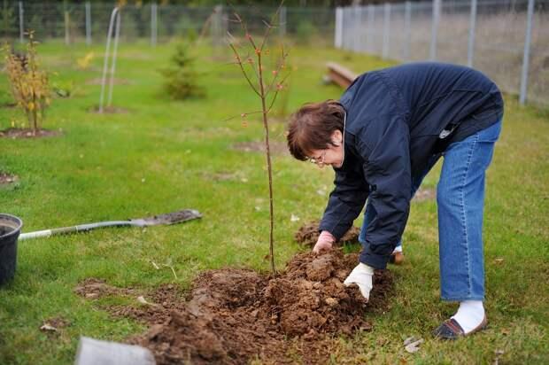 как сохранить осенние саженцы до весны