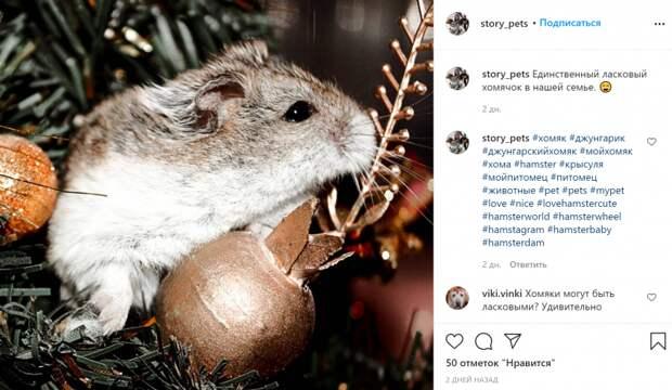 Фото дня: хомяк — главное украшение ёлки