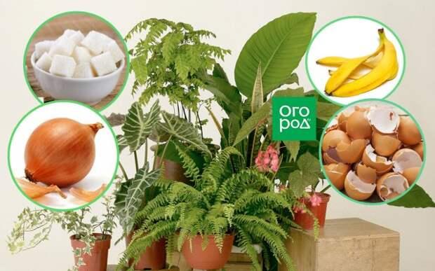 Народные средства для подкормки растений