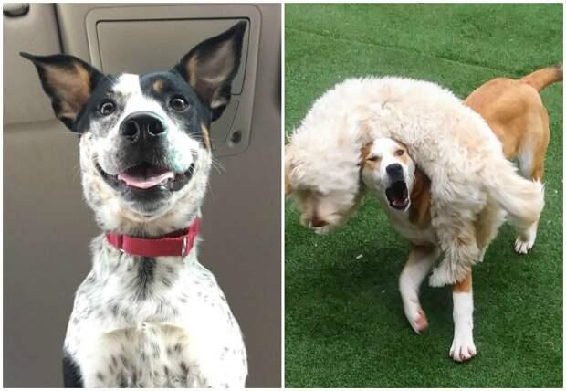 20 чудаковатых собак, которые обязательно поднимут вам настроение забавно, забавные животные, истории, питомцы, подборка, смешно, собаки, хозяева