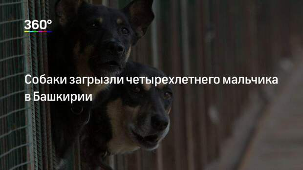 Собаки загрызли четырехлетнего мальчика в Башкирии