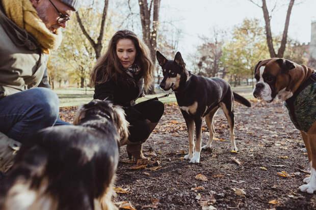 Как отучить собаку бежать к другим питомцам на улице