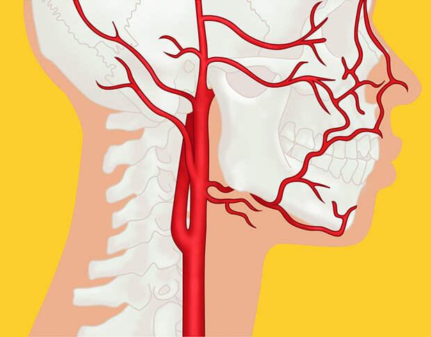Профессор Огулов: Почему возникают инсульт, инфаркт, варикоз, гипертония и гипотония