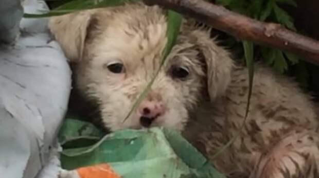 Лил сильный дождь, а на свалке дрожал от сырости и холода маленький щенок