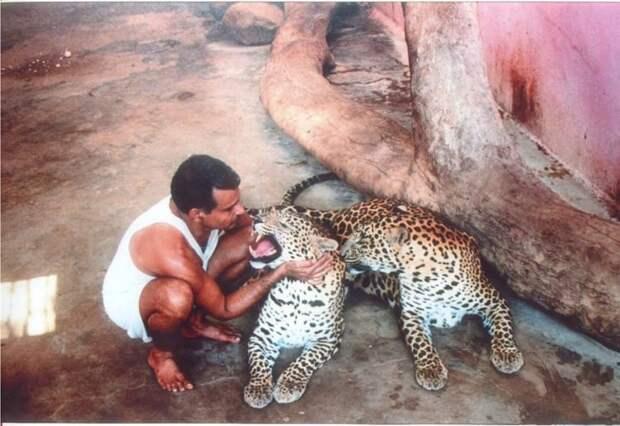 У него дома уже бегают леопарды, крокодилы и дикие шакалы! Но он продолжает выменивать маленьких зверят у соседей-мясоедов…