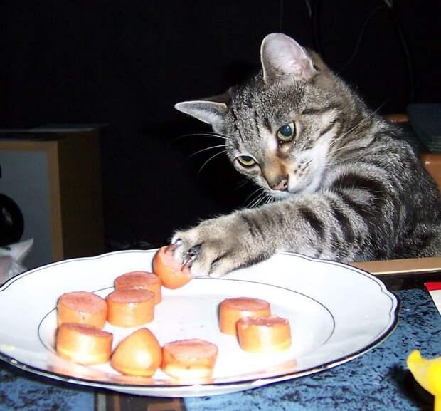 Кошки-воришки, которые были пойманы на горячем