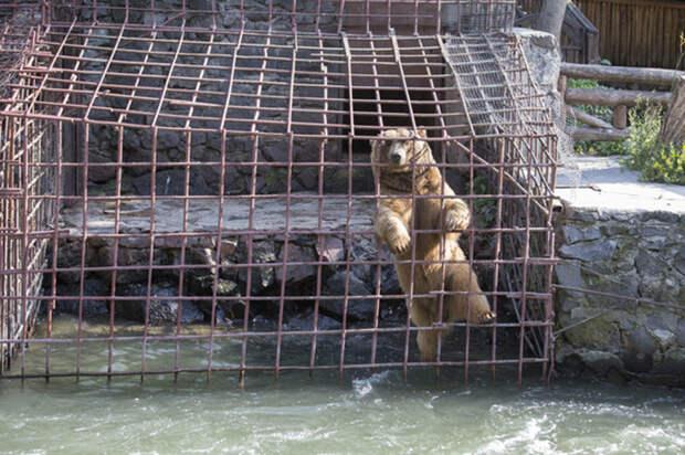 Руководитель спасательной группы обещает, что теперь у мишек будет достойная жизнь.