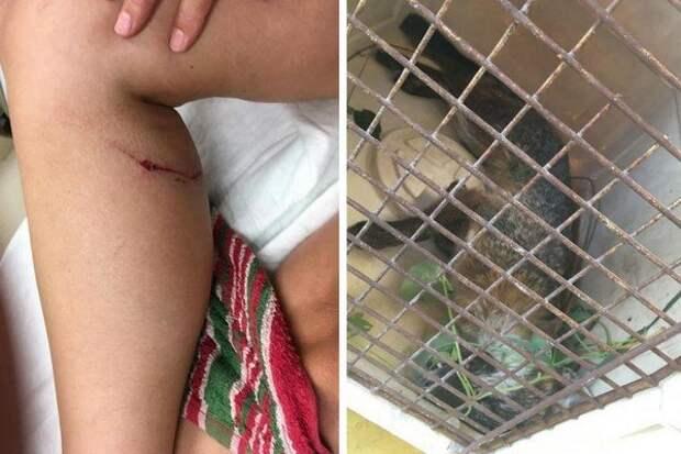 52-летняя американка задушила бешеную лисицу одной рукой бешенство, в мире, животные, лиса, люди, укус