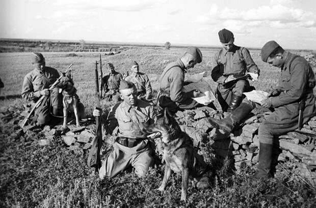 Кинологи с собаками, 1942 год./Фото: i1.wp.com