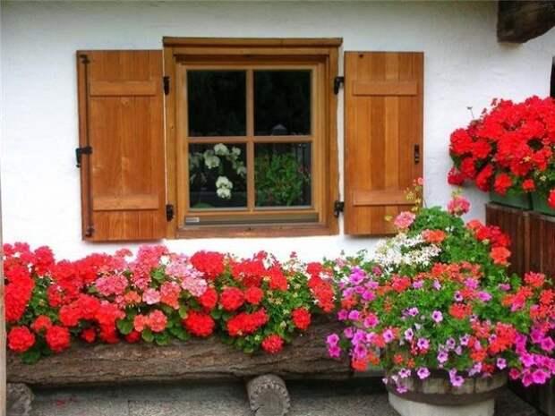 Цветник под окном