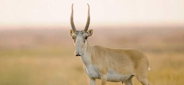 К штрафу в Т1,7 млрд и семи годам заключения приговорили браконьеров в ЗКО
