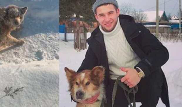 «Спи спокойно, Друг». Стало известно о смерти пса, спасенного от мороза в Башкирии