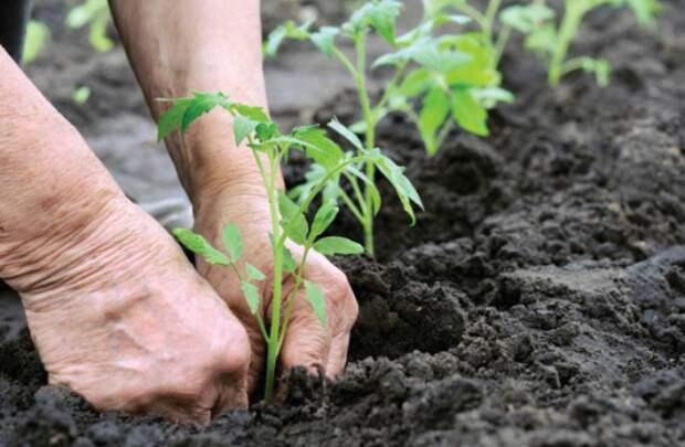 антидепрессанты в почве: Органическое земледелие, пермакультура