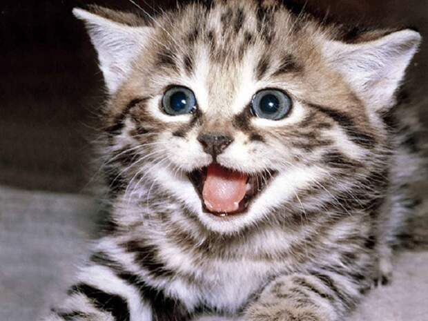 Подборка приколов с котами