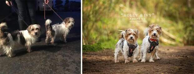 16. Холли и Айви животные, помощь, портрет, приют, собака, фотограф, хозяин