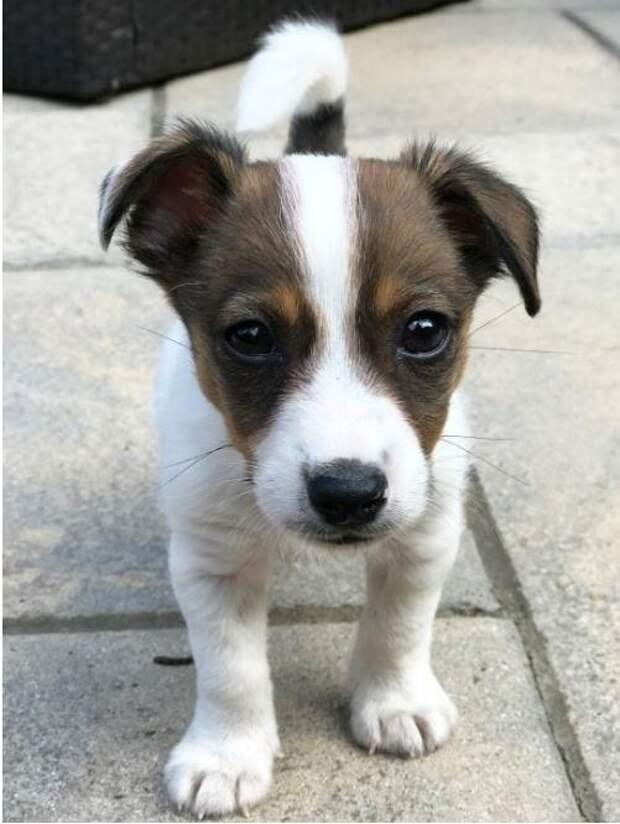 К чему приводят покупки онлайн: пара сдала щенка первому же полицейскому