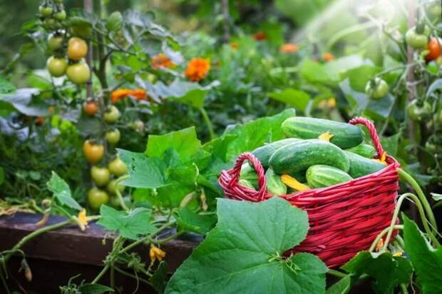 Биопрепараты для хорошего урожая