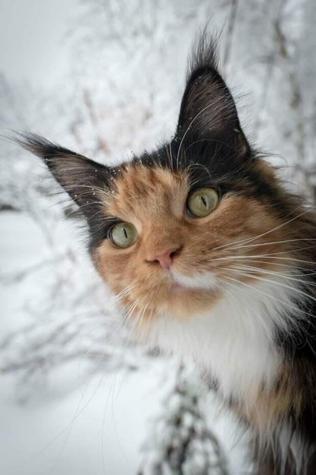 Кот привел домой кошку и сказал: «Человек, это моя женщина и мы будем жить вместе. В твоем доме»