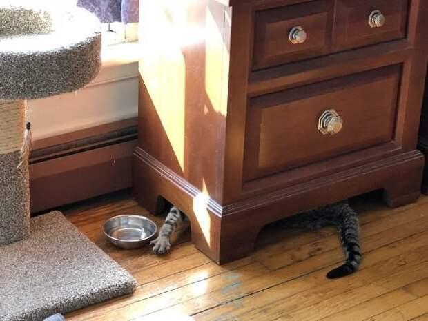 Коты, при виде которых невозможно не смеяться