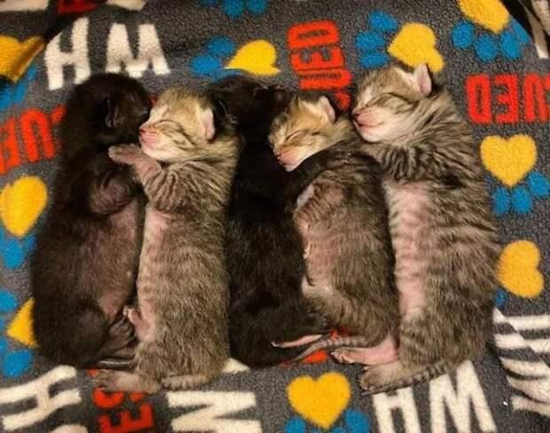 Кошка подарила котятам любовь, но только один из котят больше не может без этой любви жить