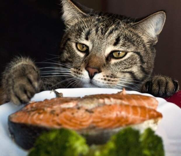 Борзель еда, животные, коты
