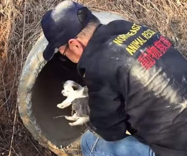 Волонтер и щенок