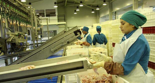 Специалисты Роскачества рассказали, чем производители «подлечивают» тушки бройлеров
