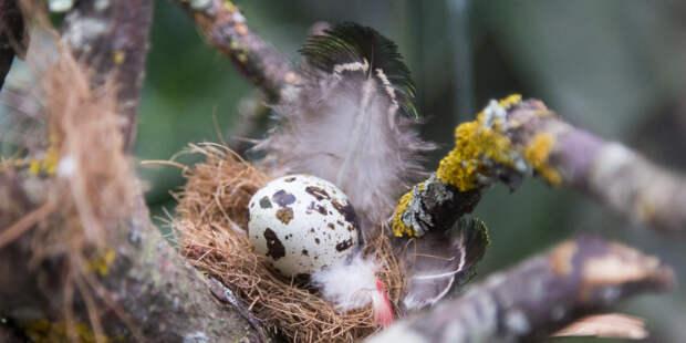 Эксперимент с перепелиными яйцами на МКС перенесли на 2022 год
