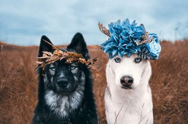 2. Когда я встретил тебя, то понял: приключения начинаются жизненная позиция, жизнеутверждающие, канада, собаки, философия жизни, фото собак, фотограф, хаски