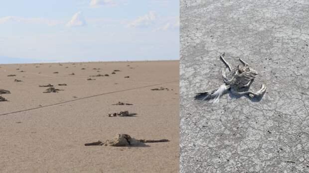Второе по величине озеро Турции превратилось в кладбище мертвых фламинго