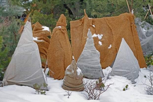 укрывать деревья на зиму