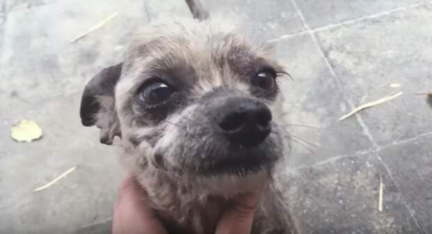 «Счастье — под ногами…» Девушка подобрала самого печального пса и превратила его в картинку!)