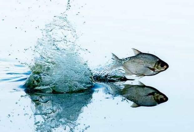 Нерест 2019 - чем и где можно рыбачить без штрафа по-новому закону