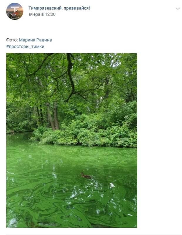Фото дня: изумрудные водоемы Тимирязевского