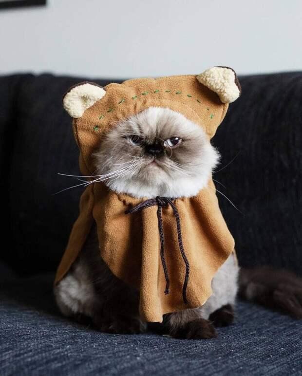 Очевидно, что наряжать Нона в смешные костюмчики — не самая лучшая идея животные, кот, милота, мимика, морда, ненависть