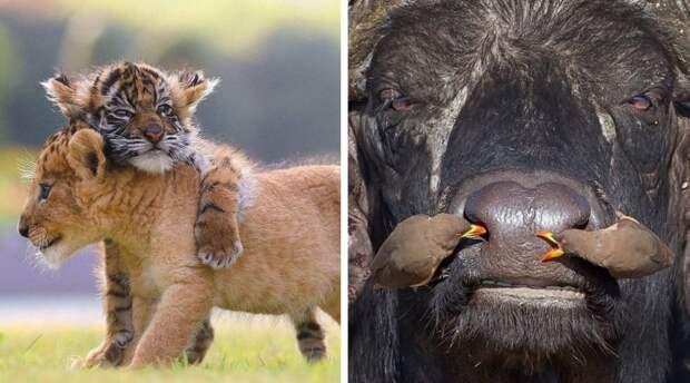 20 забавных и милых фото дикой природы, которые помогут пережить даже самый сложный день