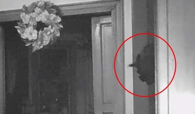 Камера наблюдения засняла странное существо, выглядывающее из двери (ВИДЕО)