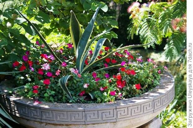 Бальзамины с агавой американской окаймленной в стационарной садовой вазе в полутени