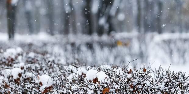 Местные жители на Академика Комарова помогли коммунальщикам убрать снег