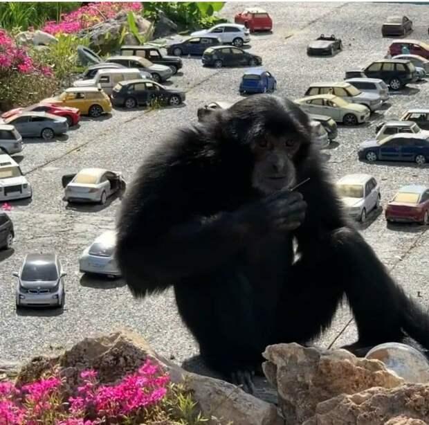 В Бахчисарае обезьяны Матильда и София прогулялись по Симферополю в миниатюре