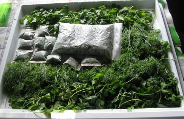 Зелень нужно разделить на порции перед тем, как класть в морозилку. / Фото: Ogorod.mirtesen.ru