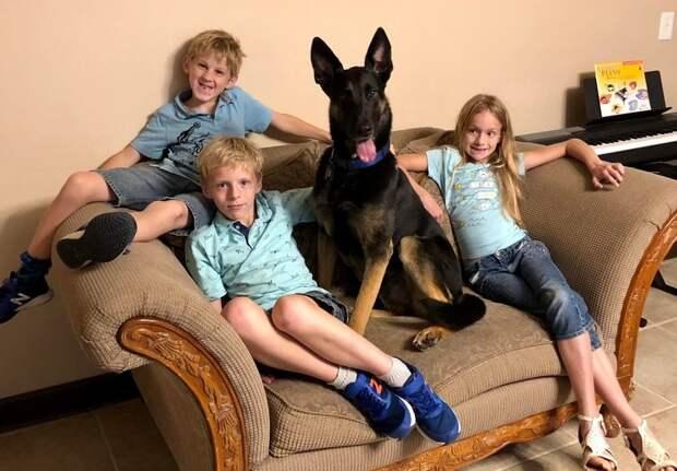 23 доказательства того, что собака для ребенка будет круче любого айфона